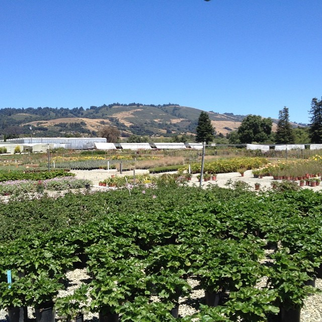 Nan is at #SuncrestNursery in Watsonville. It is a little bit of Heaven on Earth!  @agrowingpassion