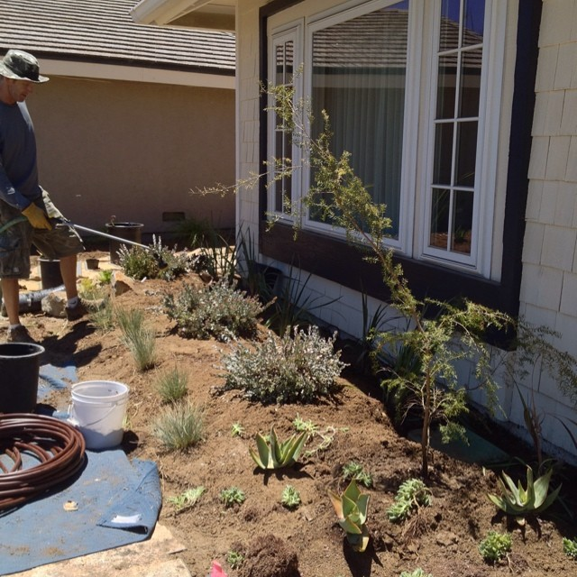 #nansterman is laying out a new #waterwise garden for a client. @agrowingpassion
