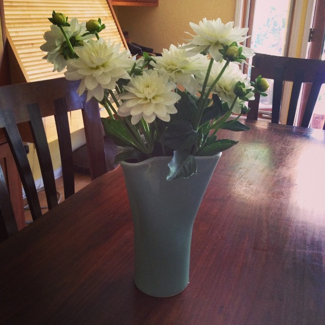 Fresh cut #Dahlias.  A gift from friend Devon Hedding, grown by a farmer in her #SolanaBeach neighborhood. Thank you Devin!  #SlowFlowers. @agrowingpassion
