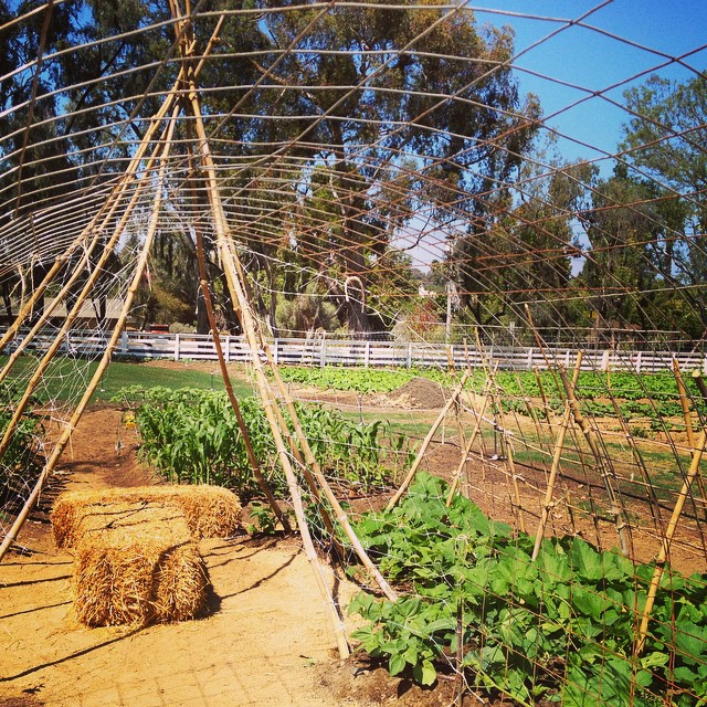 Gorgeous squash  #Leichtag Farm  @agrowingpassion