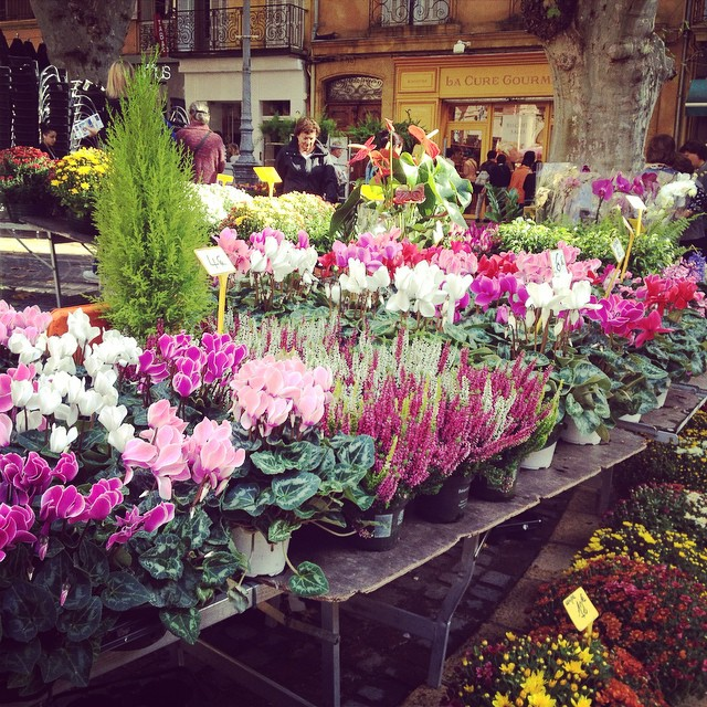 Saturday flower market in Aix en Provence. @agrowingpassion  #gardensinfrance2014
