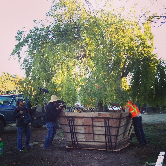#TodaysShoot. Preparing to move a #BigTree #OnLocation  at #BaronBrothersNursery.  @agrowingpassion