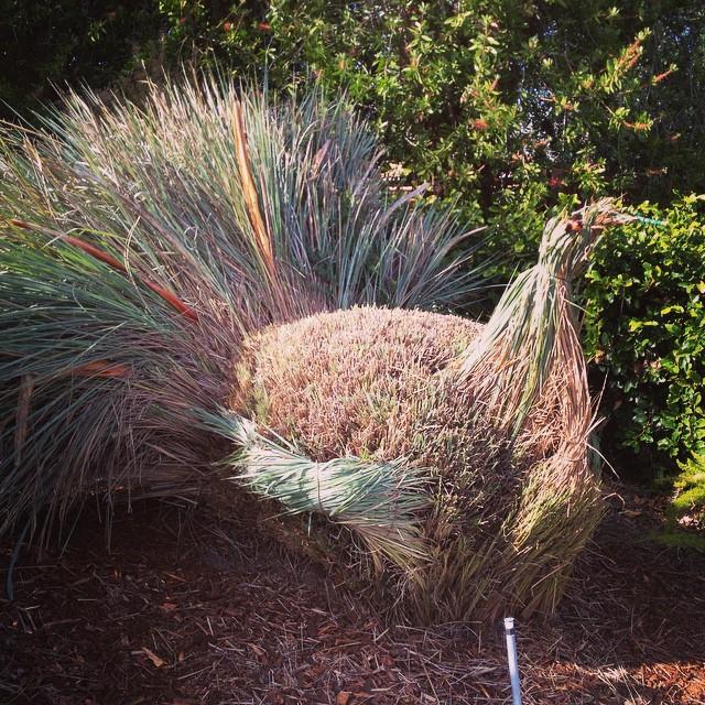 Grass fed turkey?  @agrowingpassion