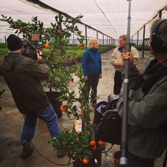 Walking and talking about citrus with #EdLaivo at #FourWindsGrowers, in #Winters #California  @agrowingpassion