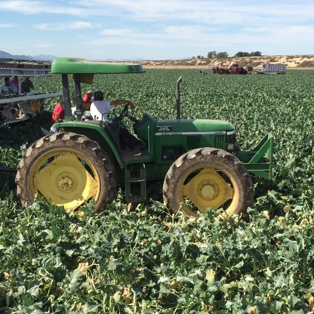 Broccoli harvest at #FisherRanch in Blythe #California.  #onlocation #shootingtoday @agrowingpassion