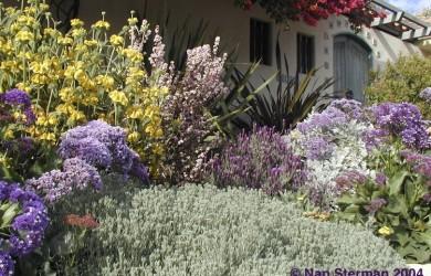 flowery waterwise garden