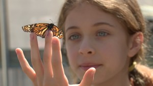 The Butterfly Farm is where children and adults learn about monarchs and other butterflies