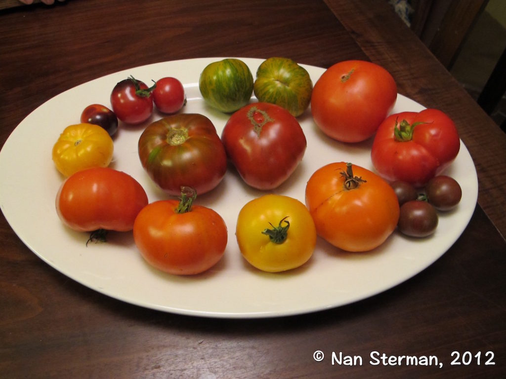Here's a small sampling of the wide variety of tomatoes you can grow in your vegetable garden.