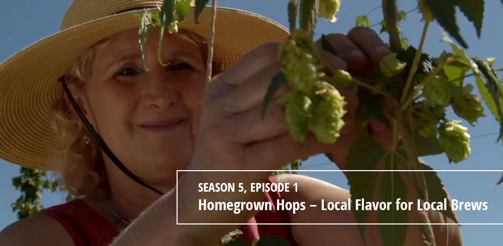 Episode 501 Homegrown Hops