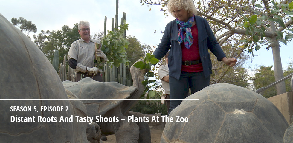 Episode 502 Distant Roots And Tasty Shoots