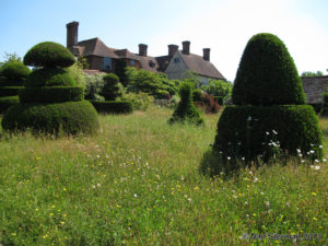 Topiary, wild grasses and wildflowers are home to insect pollinators at England's Great Dixter garden